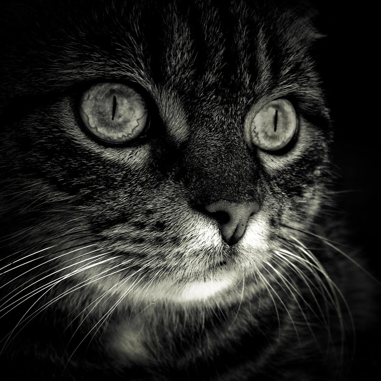 Katzen-Bild auf Edelstahl