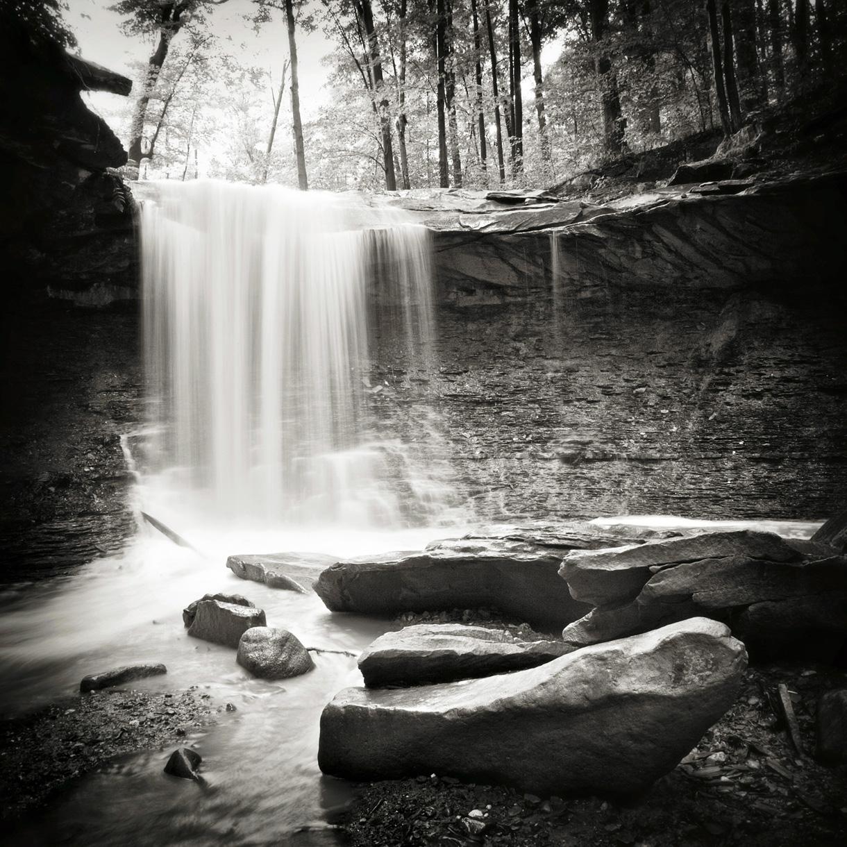 Wald-Bild auf Edelstahl