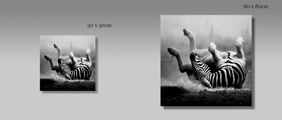 Zebra auf Edelstahl gedruckt